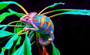 What Are the Enemies of the Chameleons?