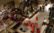 What Are the Three Time Periods the Dinosaurs Lived in?