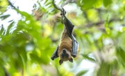Why We Can't Afford to Lose Bats