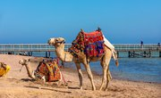 Animal Adaptations to Hot Climates