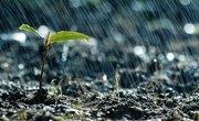 Plants Actually Panic When It Rains