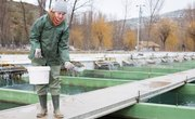 Food for Fish Farms