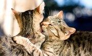 List of the Types of Animal Behavior