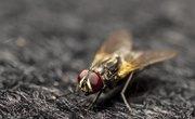 How Do Flies Mate?