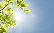 Why Do Plants Need the Sun?