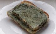 How Does Mold Grow on Bread?