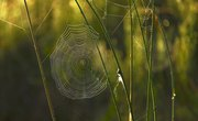 How to Identify a Spider by Web Pattern