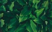 Six Basic Parts of a Plant
