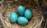The Amazing Way Baby Birds Communicate From Inside Their Eggs