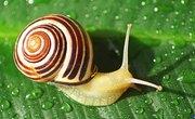 Snails Adaptation to Habitat