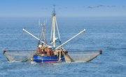 Objectives of Fish Farming