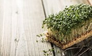 Fastest Growing Plants for a Science Project