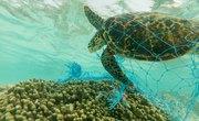 Advantages & Disadvantages of Ocean Dumping