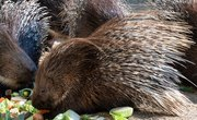 Which Animals Have Prickly Spines?