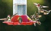 When to Put Up a Hummingbird Feeder in Austin, Texas