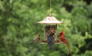 Effects of Height of Bird Feeders