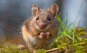 What Animals Eat Potatoes?