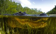Plant & Animal Adaptations in Swamps