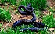 How to Identify the Snakes of New Jersey