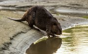 Types of Wild Rodents in Ohio