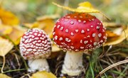 How to Identify Wild Mushrooms in Florida