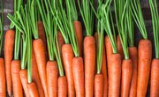 What Happens After You Put a Carrot in Saltwater?