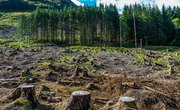 How Does Deforestation Affect the Air?