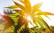 How Does Marijuana Help People's Health