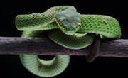 How Snakes Adapt in the Forest