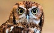 Screech Owl Habitat