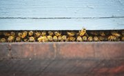 Our Bees Are Still At Risk — Here's How You Can Help Them