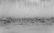 Does Rainwater Contain Nitrogen?
