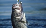 What is the Best Baitcast Fishing Line?