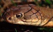 Biotic Factors About Snakes