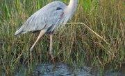 Wetland Plants & Wildlife
