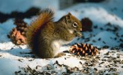 How to Feed Wild Squirrels