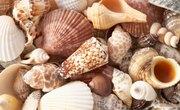 How to Identify Seashells on the Atlantic Coast