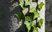 What Are the 3 Types of Leaf Arrangements?