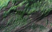 The Morphology of Algae