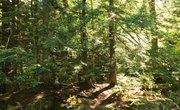 Advantages and Disadvantages of Natural Environments
