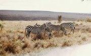 List of Savanna Animals