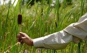 Edible Wild Plants in New Hampshire