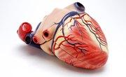 What Three Things Help Push Blood Through Veins?