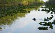 Endangered Animals in Freshwater Biomes