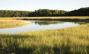 Landforms of the Wetlands
