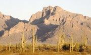Niches in Deserts