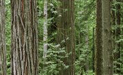 Abiotic Factors in the Redwood Forest Ecosystem