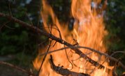 The Effects of Bush Burning on Soil Conditions