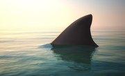 Behavioral Adaptations for Sharks