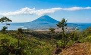 Plants & Animals Around Volcanoes
